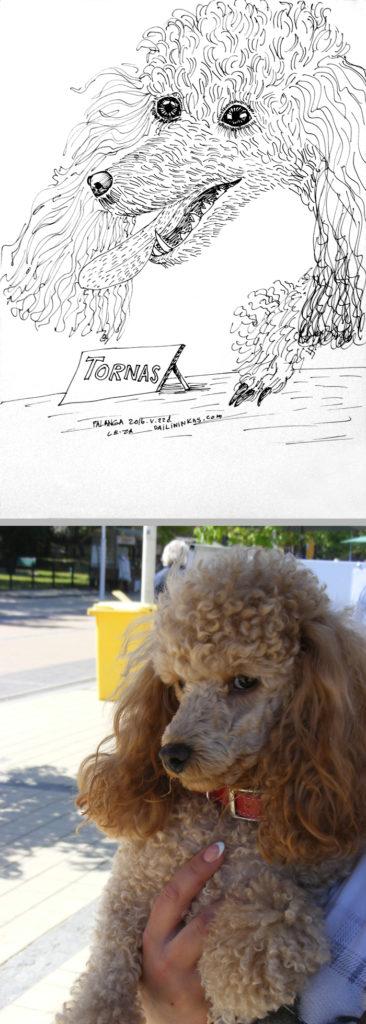 """Pudelio Torno karikatūra piešta """"gyvai"""""""